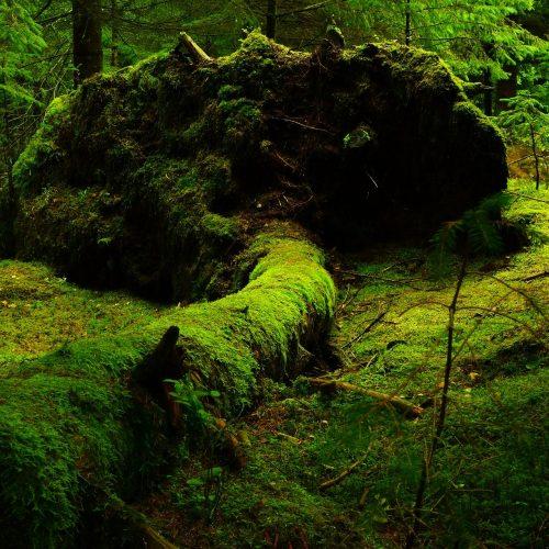 http://nueva.fondonatural.eu/project-type/plantemos-un-bosque/